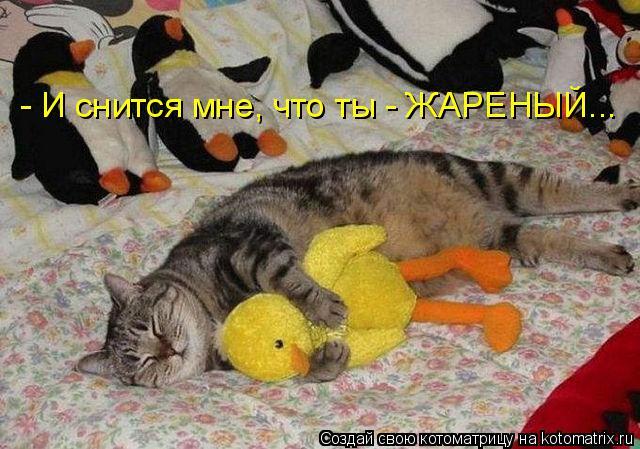 Котоматрица: - И снится мне, что ты - ЖАРЕНЫЙ...