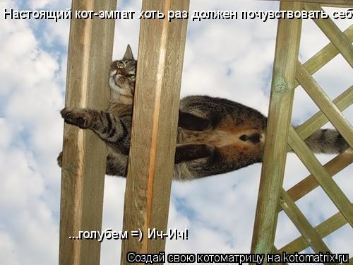 Котоматрица: Настоящий кот-эмпат хоть раз должен почувствовать себя  ...голубем =) Ич-Ич!