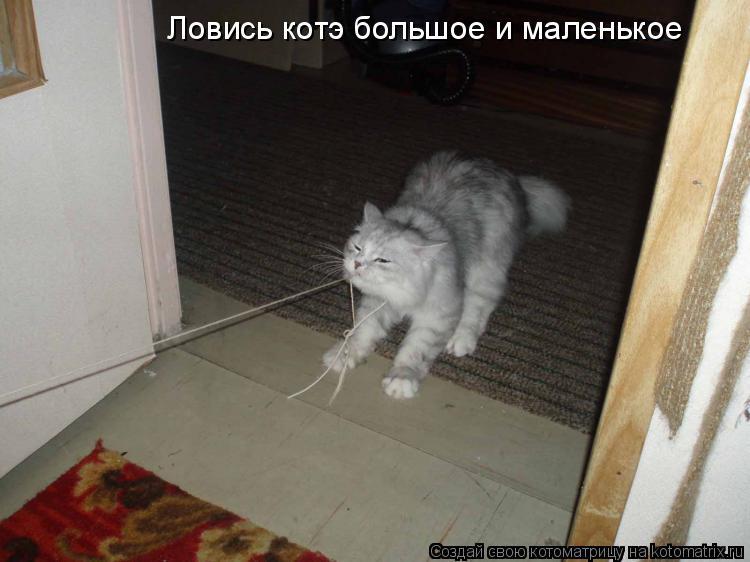 Котоматрица: Ловись котэ большое и маленькое