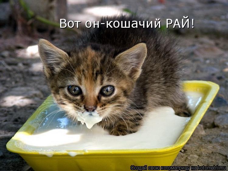 Котоматрица: Вот он-кошачий РАЙ!