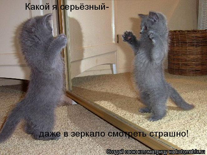 Котоматрица: Какой я серьёзный- даже в зеркало смотреть страшно!
