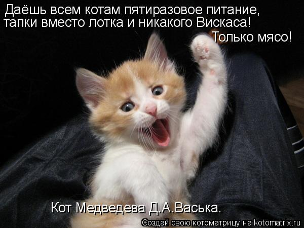 Котоматрица: Даёшь всем котам пятиразовое питание, тапки вместо лотка и никакого Вискаса! Только мясо! Кот Медведева Д.А.Васька.