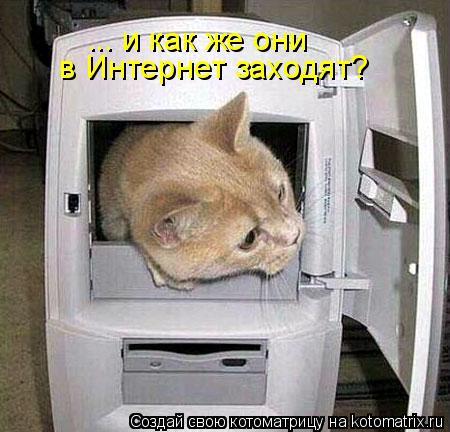 Котоматрица: ... и как же они  в Интернет заходят?