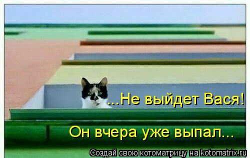 Котоматрица: ...Не выйдет Вася! Он вчера уже выпал...