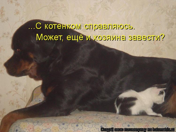 Котоматрица: ...С котенком справляюсь. Может, ещё и хозяина завести?