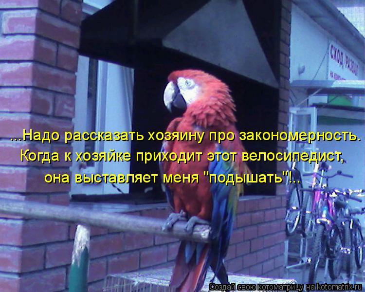 """Котоматрица: ...Надо рассказать хозяину про закономерность. Когда к хозяйке приходит этот велосипедист, она выставляет меня """"подышать""""!.."""