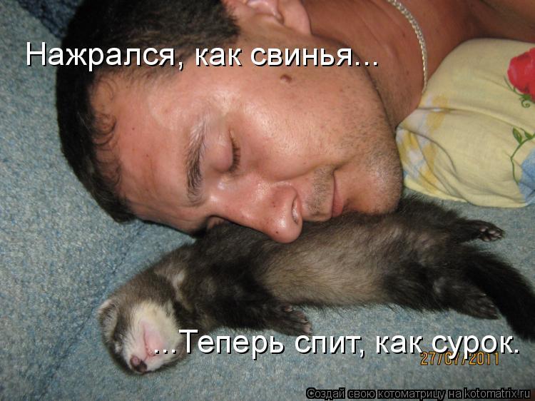 Котоматрица: Нажрался, как свинья... ...Теперь спит, как сурок.