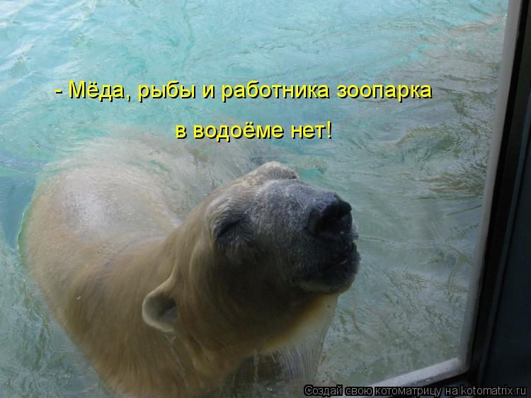 Котоматрица: - Мёда, рыбы и работника зоопарка в водоёме нет!