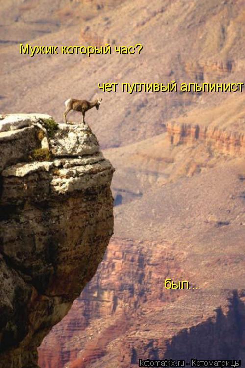 Котоматрица: Мужик который час? чет пугливый альпинист  был...