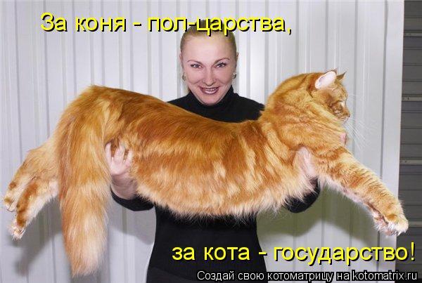 Котоматрица: За коня - пол-царства,  за кота - государство!