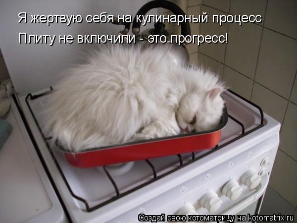 Котоматрица: Я жертвую себя на кулинарный процесс Плиту не включили - это прогресс!