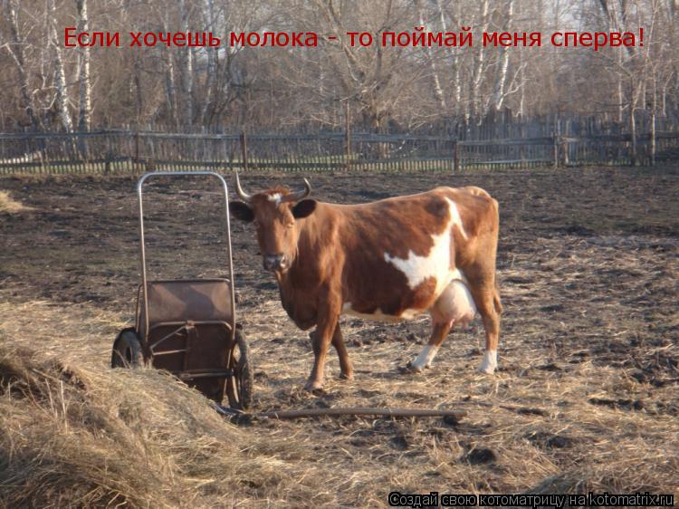 Котоматрица: Если хочешь молока - то поймай меня сперва!