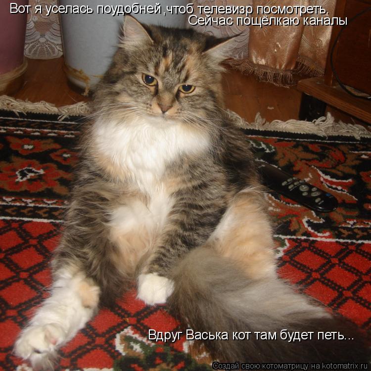 Котоматрица: Вот я уселась поудобней ,чтоб телевизр посмотреть. Сейчас пощёлкаю каналы Вдруг Васька кот там будет петь...
