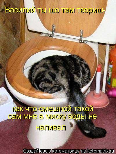 Котоматрица: Василий ты шо там твориш- как что смешной такой  сам мне в миску воды не  наливал