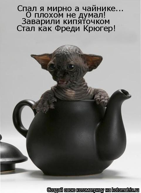 Котоматрица: Спал я мирно а чайнике... О плохом не думал! Заварили кипяточком Стал как Фреди Крюгер!