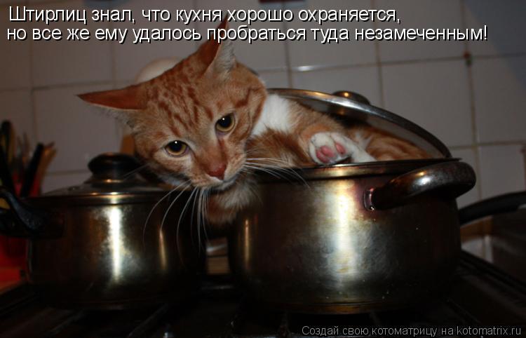 Котоматрица: Штирлиц знал, что кухня хорошо охраняется, но все же ему удалось пробраться туда незамеченным!