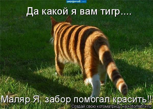 Котоматрица - Да какой я вам тигр.... Маляр Я, забор помогал красить!!!