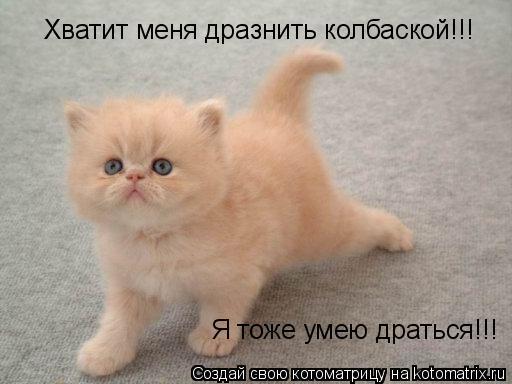 Котоматрица: Хватит меня дразнить колбаской!!! Я тоже умею драться!!!