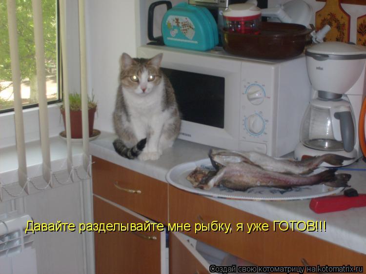 Котоматрица: Давайте разделывайте мне рыбку, я уже ГОТОВ!!!