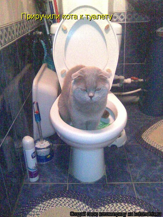 Котоматрица: Приручили кота к туалету