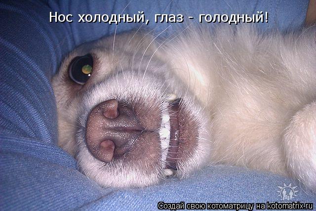 Котоматрица: Нос холодный, глаз - голодный!