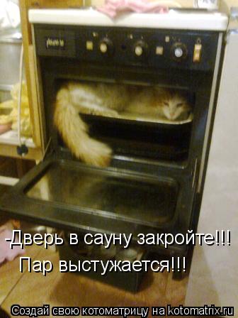 Котоматрица: -Дверь в сауну закройте!!!  Пар выстужается!!!