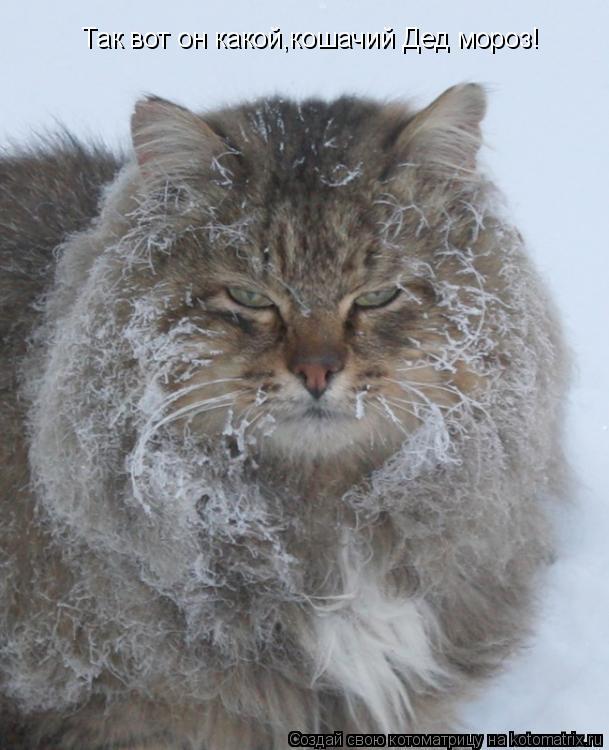 Котоматрица - Так вот он какой,кошачий Дед мороз!