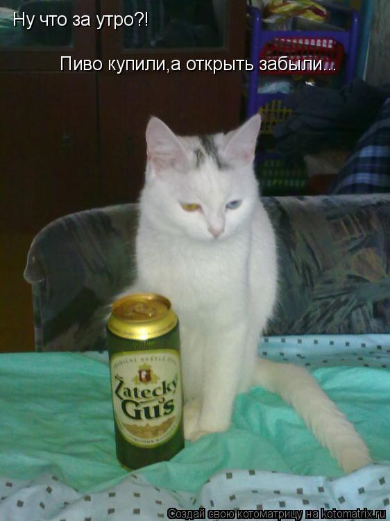 Котоматрица: Ну что за утро?! Пиво купили,а открыть забыли...