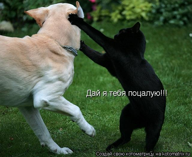 Котоматрица: Дай я тебя поцалую!!!