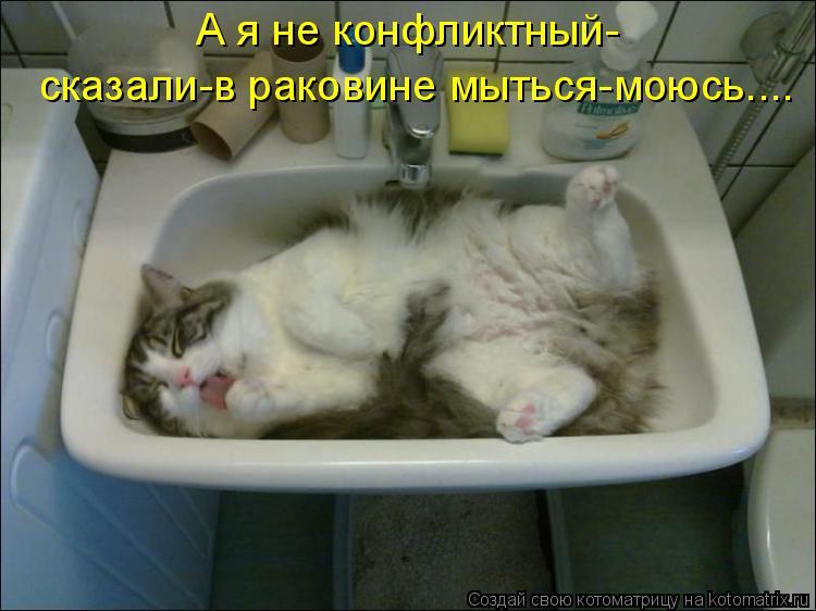 Котоматрица - А я не конфликтный- сказали-в раковине мыться-моюсь....