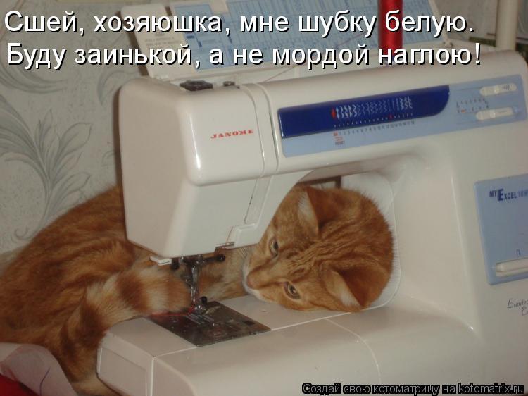 Котоматрица - Сшей, хозяюшка, мне шубку белую. Буду заинькой, а не мордой наглою!