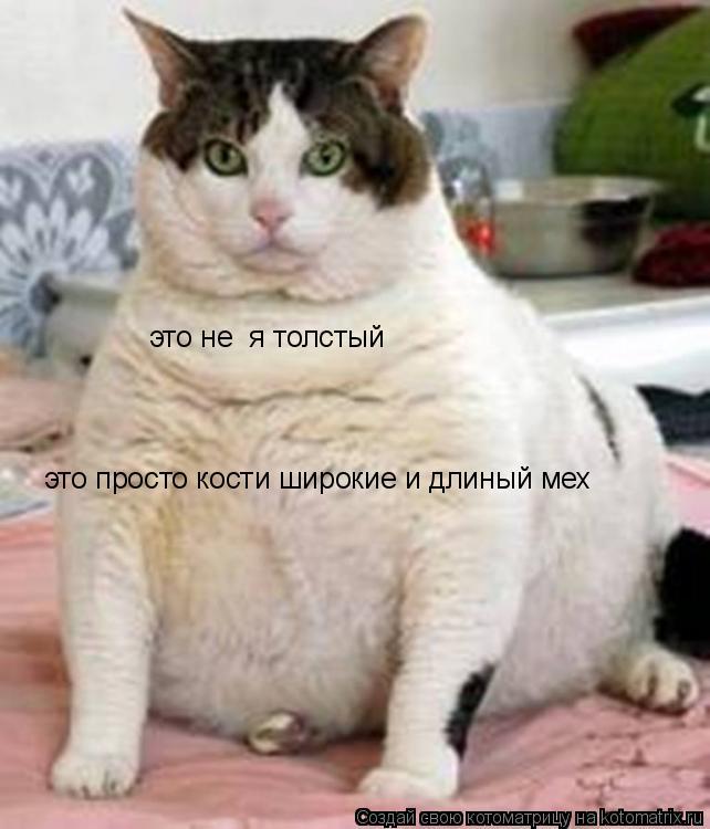 Котоматрица: это не  я толстый  это просто кости широкие и длиный мех
