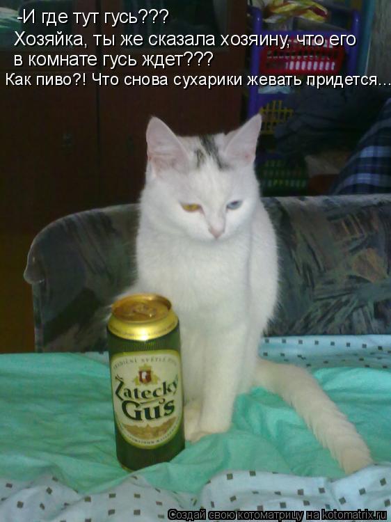 Котоматрица: -И где тут гусь??? Хозяйка, ты же сказала хозяину, что его  в комнате гусь ждет??? Как пиво?! Что снова сухарики жевать придется...