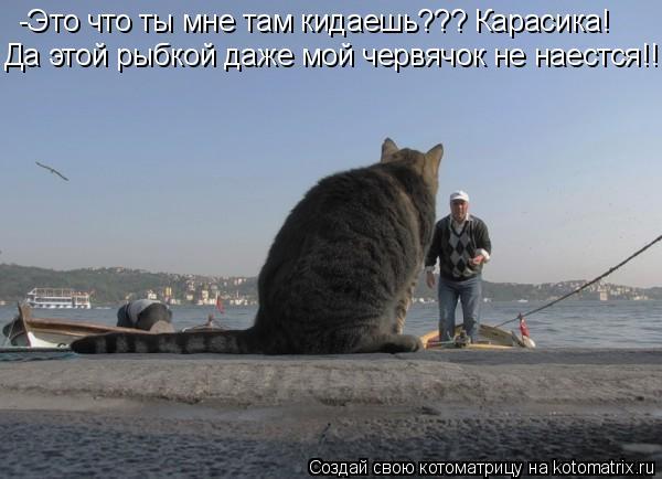 Котоматрица: -Это что ты мне там кидаешь??? Карасика! Да этой рыбкой даже мой червячок не наестся!!!