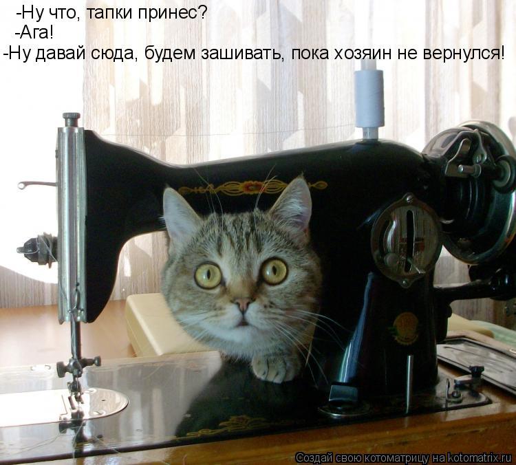 Котоматрица: -Ну что, тапки принес? -Ага! -Ну давай сюда, будем зашивать, пока хозяин не вернулся!
