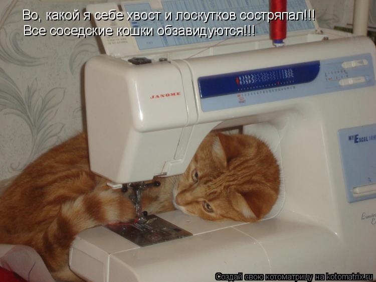 Котоматрица: Во, какой я себе хвост и лоскутков состряпал!!! Все соседские кошки обзавидуются!!!