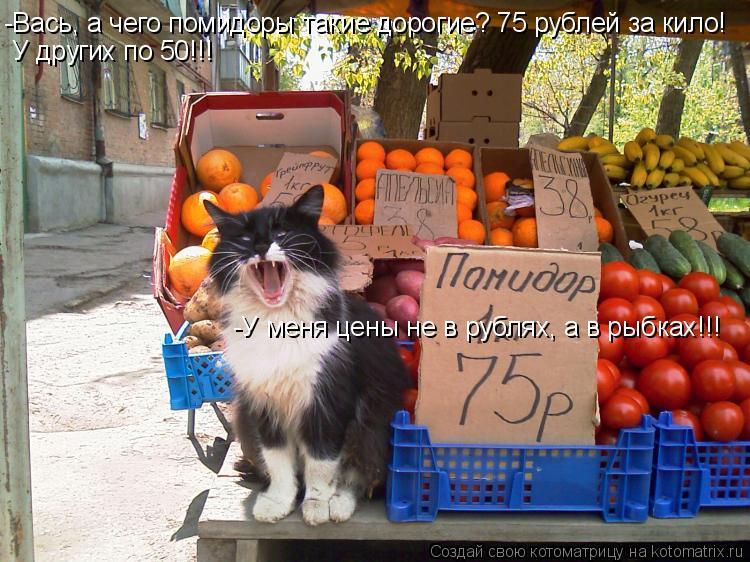 Котоматрица: -Вась, а чего помидоры такие дорогие? 75 рублей за кило! У других по 50!!! -У меня цены не в рублях, а в рыбках!!!