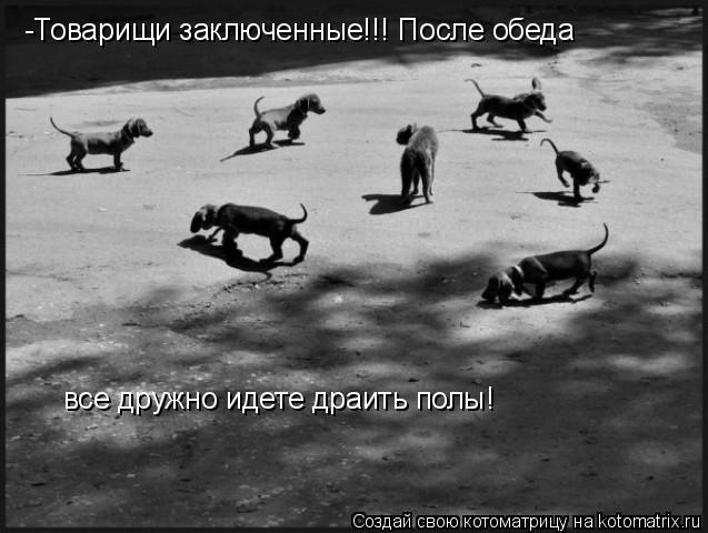 Котоматрица: -Товарищи заключенные!!! После обеда  все дружно идете драить полы!