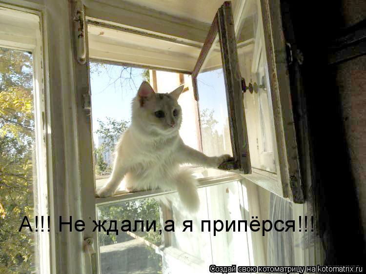 Котоматрица: А!!! Не ждали,а я припёрся!!!