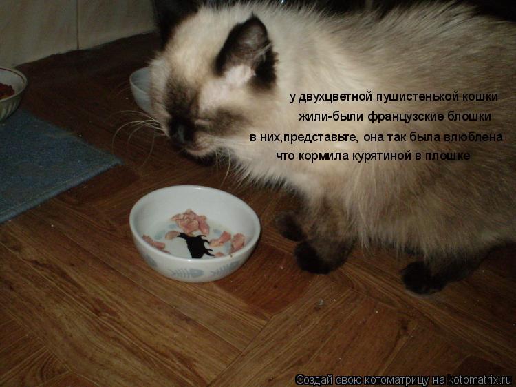 Котоматрица: у двухцветной пушистенькой кошки жили-были французские блошки в них,представьте, она так была влюблена что кормила курятиной в плошке