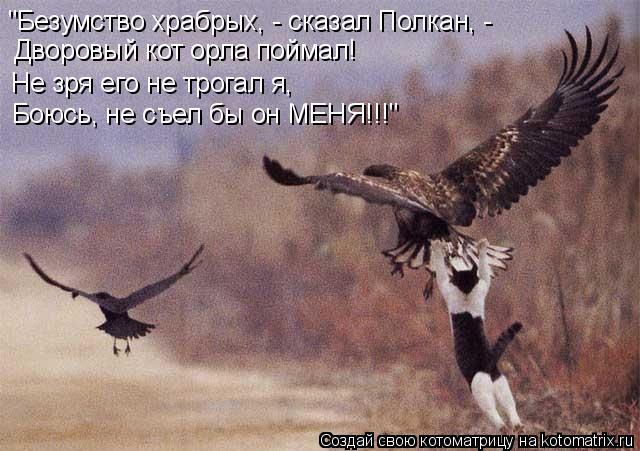"""Котоматрица: """"Безумство храбрых, - сказал Полкан, -  Дворовый кот орла поймал!  Не зря его не трогал я,  Боюсь, не съел бы он МЕНЯ!!!"""""""
