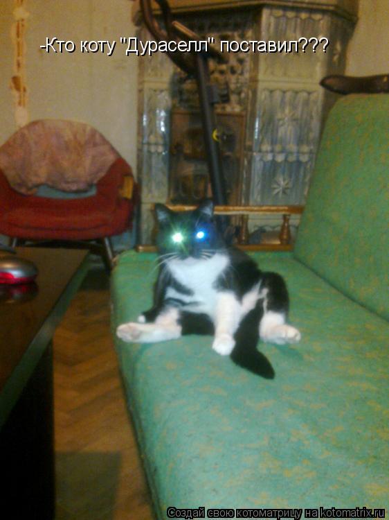 "Котоматрица: -Кто коту ""Дураселл"" поставил???"