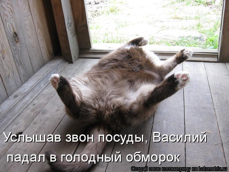 Котоматрица: Услышав звон посуды, Василий   падал в голодный обморок