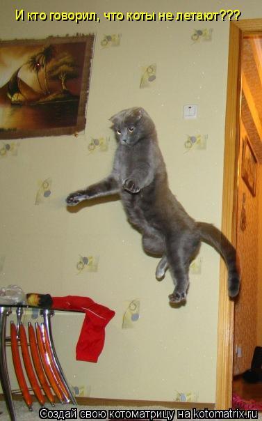 Котоматрица: И кто говорил, что коты не летают???