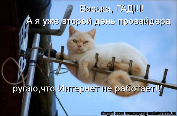 Котоматрица - Васька, ГАД!!!! А я уже второй день провайдера ругаю,что Интернет не р