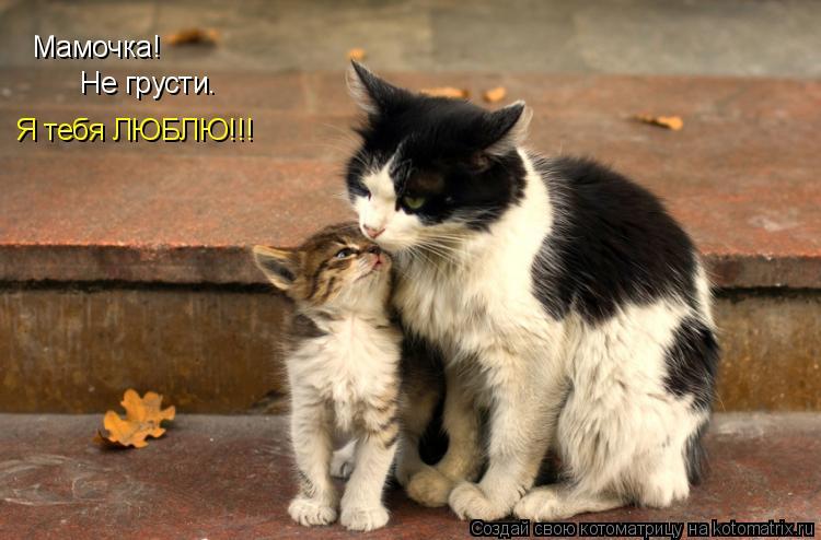 Котоматрица: Мамочка! Не грусти. Я тебя ЛЮБЛЮ!!!