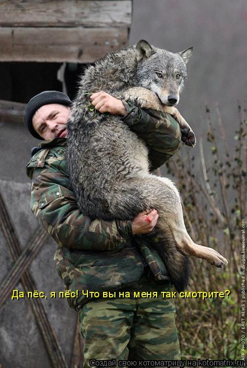 Котоматрица: Да пёс, я пёс! Что вы на меня так смотрите?