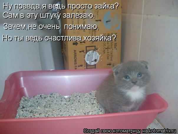Котоматрица - Но ты ведь счастлива,хозяйка? Ну правда,я ведь просто зайка? Сам в эту