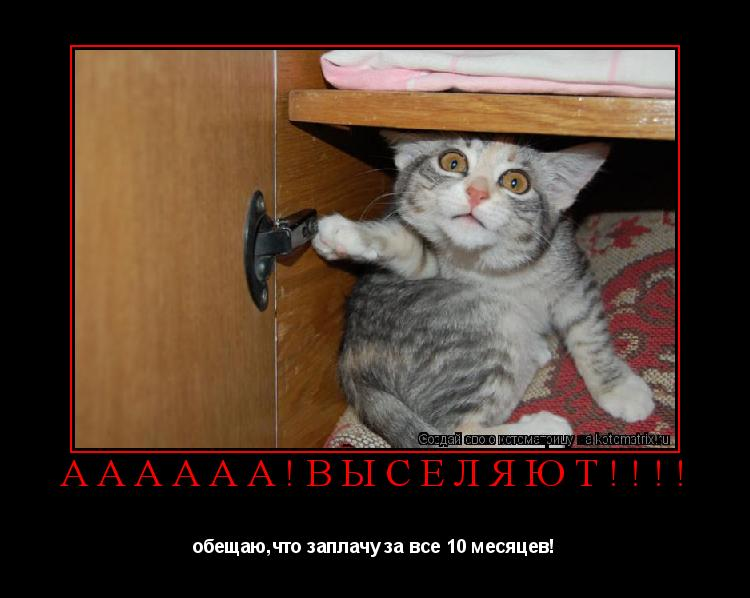 Котоматрица: АААААА!ВЫСЕЛЯЮТ!!!! обещаю,что заплачу за все 10 месяцев!