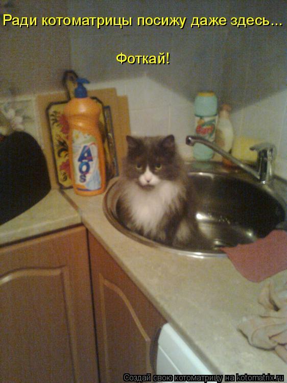 Котоматрица: Ради котоматрицы посижу даже здесь... Фоткай!